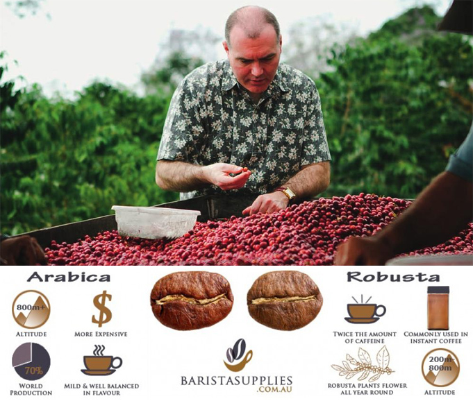 Best robusta coffee selection